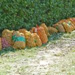 Kartoffelsaecke480x360