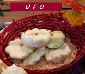 Foto von zwei UFO-Kürbissen